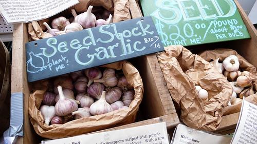seed stock