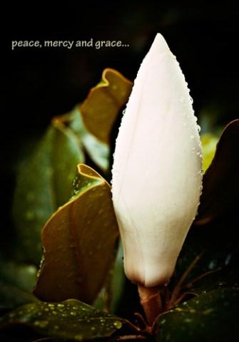 Peace By snolic...linda