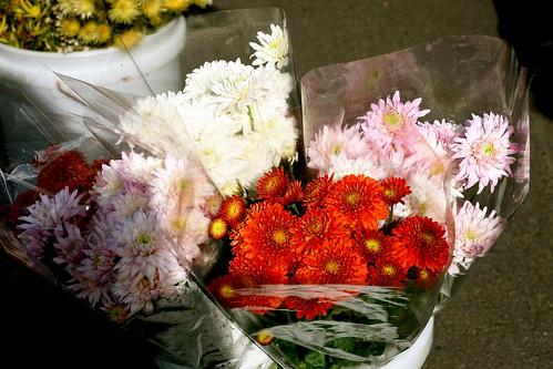 Sunday: Flowers at the Wellington Markets