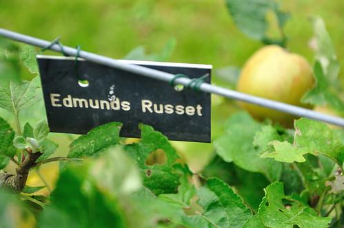 Edmunds Russet