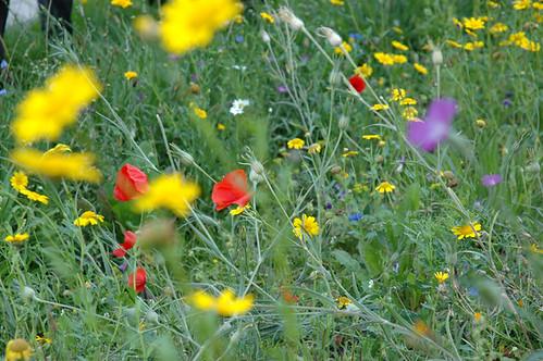 Blumen säen. Honig ernten.