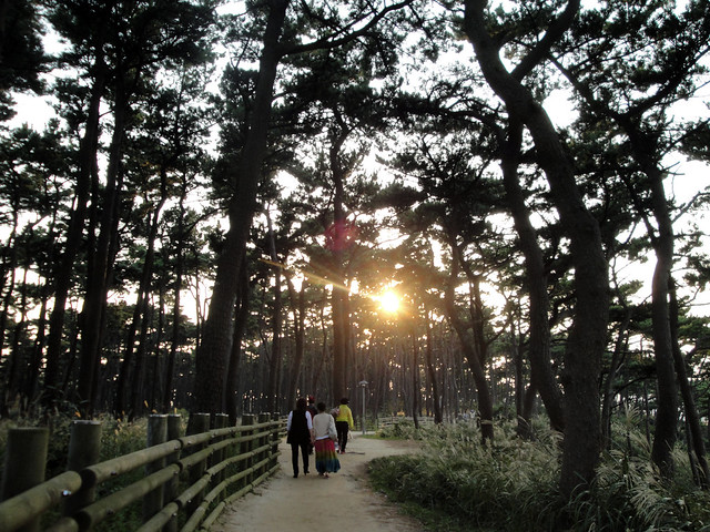 Pine Forest, Ilsan Beach