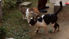 Peace - Pix 01 - cats_confrontation