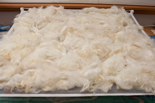 Romney fleece