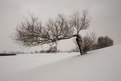 12 x ein Baum - November