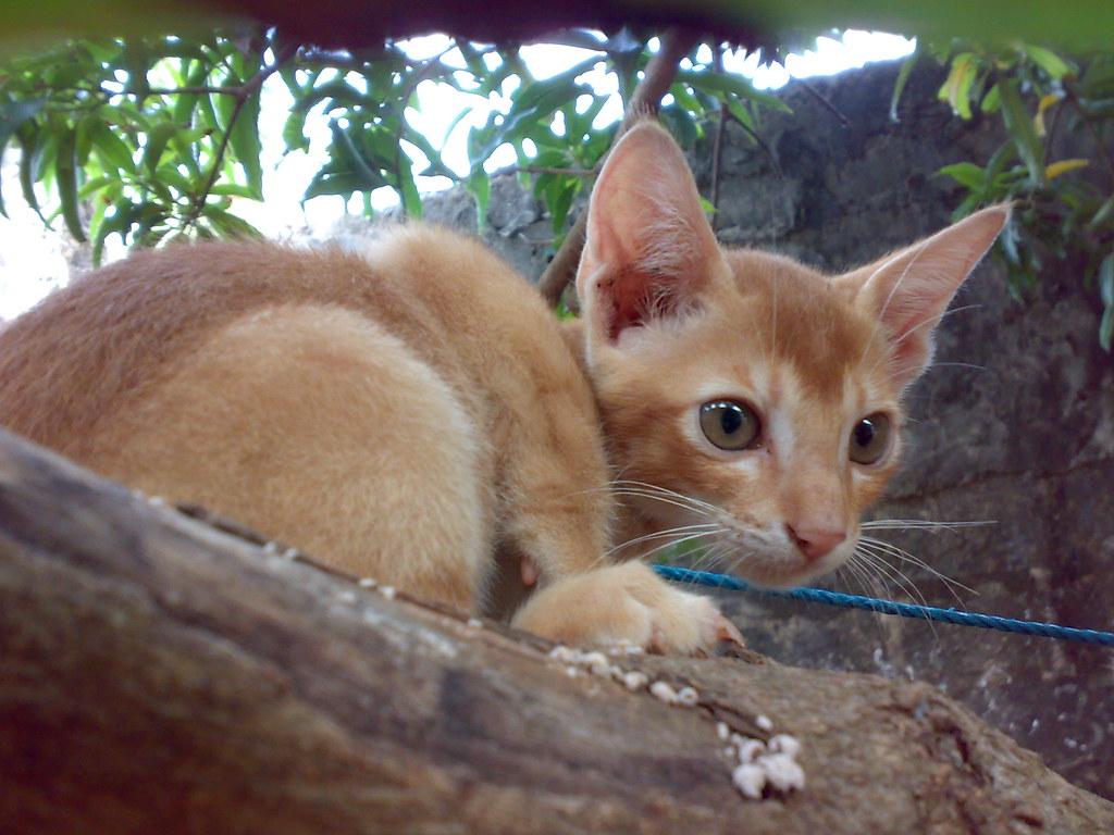 cute kittens 3