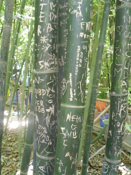 bamboo graffiti