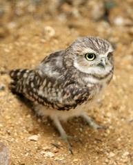 Hawk Conservancy 55