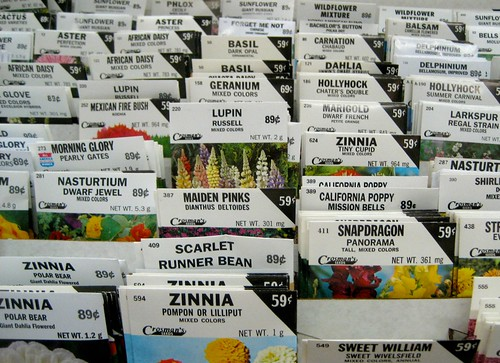 Flower Seed Packets at the Arcade Department Store