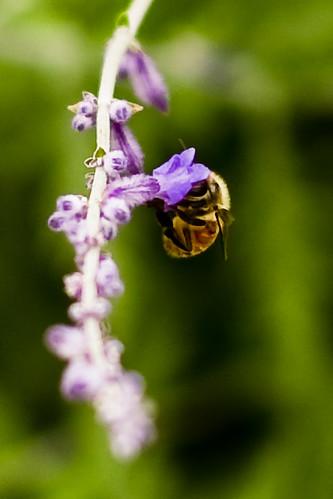 {203/365} bee