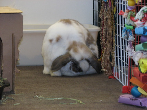 more betsy grooming