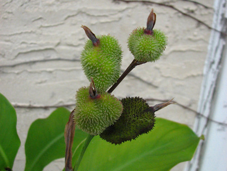 Photo of Seed Pods