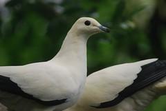 Vögel im Regenwaldhaus
