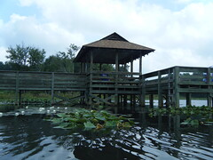 Fishing Pier at Lake Cunningham
