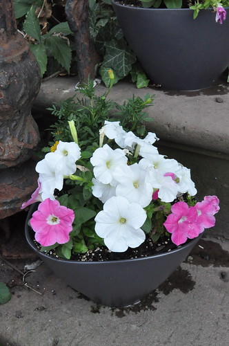 ikea planter with white and pink petunias