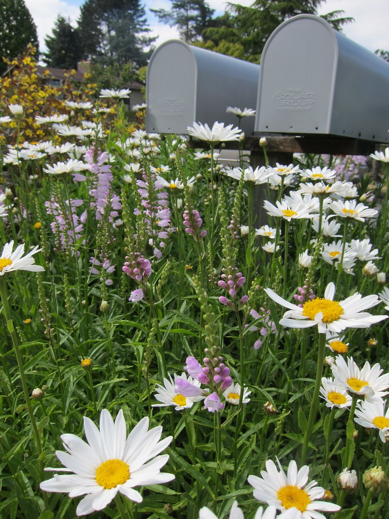 Mailboxes and daisies