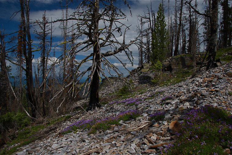 Trail 291 to Thompson Peak