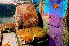 Larnaka marine life zenobia sanctuary