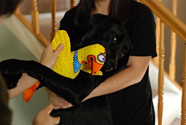 duke and chicken