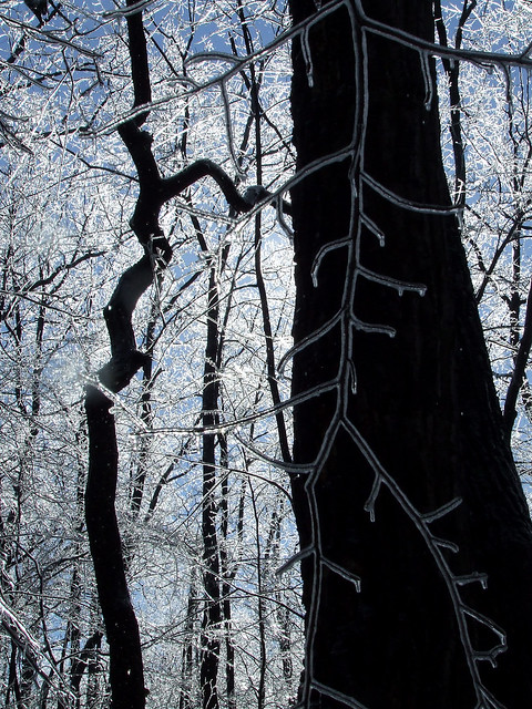 zig-zag tree in ice 2