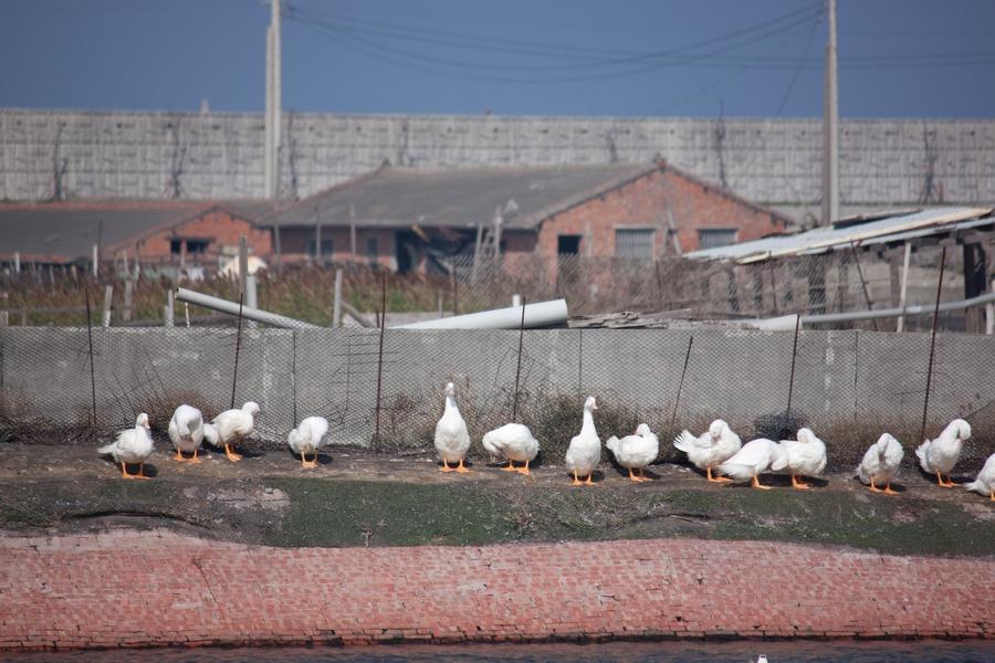 20110205_01_Beautiful Duckling_07
