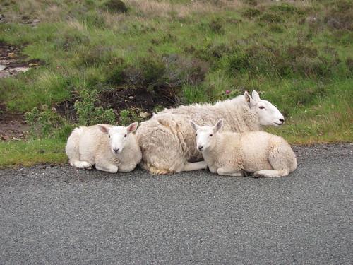 9_Sheep Friends
