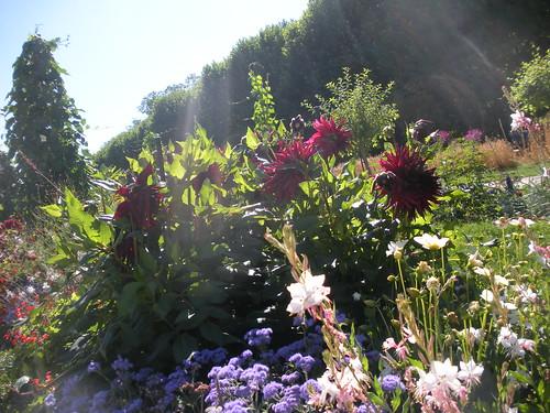 Les Jardin des Plantes