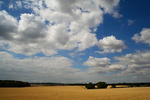 Herts Fields #1