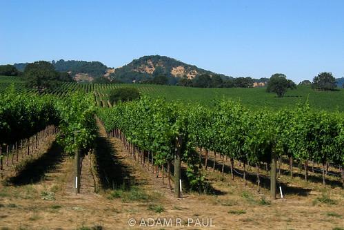 Vineyards in Alexander Valley