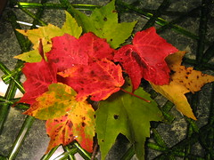 Preview of Wet Fall Foliage Bouquet