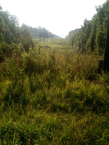 Wildflower Trail & Powerlines