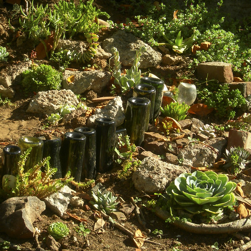 late afternoon light on the succulents in my garden