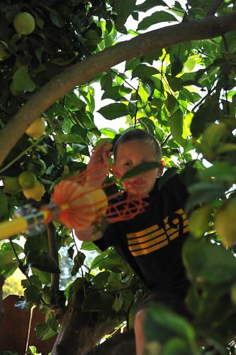 t lemon picking 2