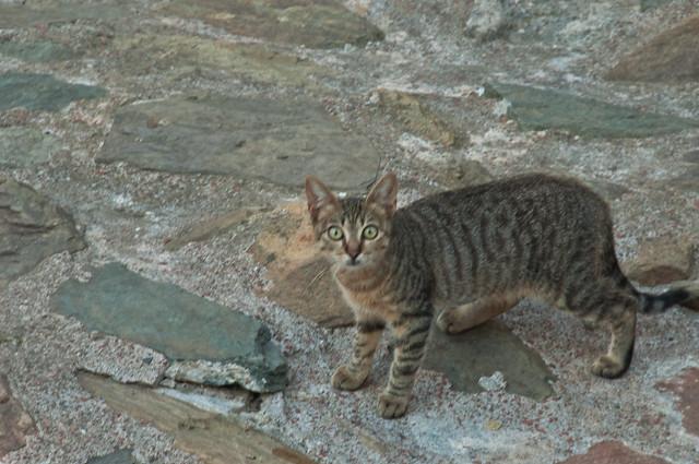 Cat in the ruins