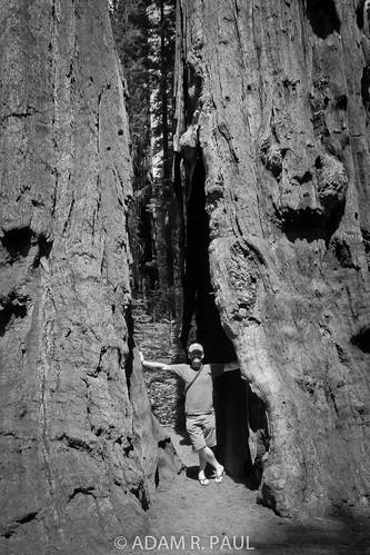 Adam and Sequoias