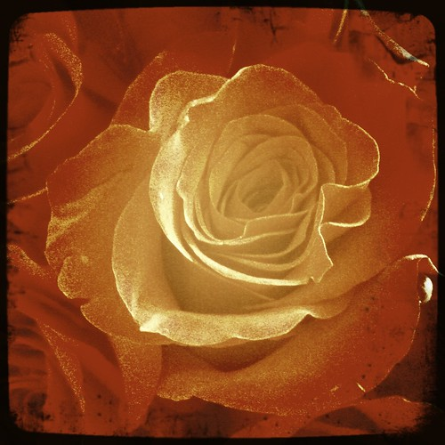 Valentine's Roses #3