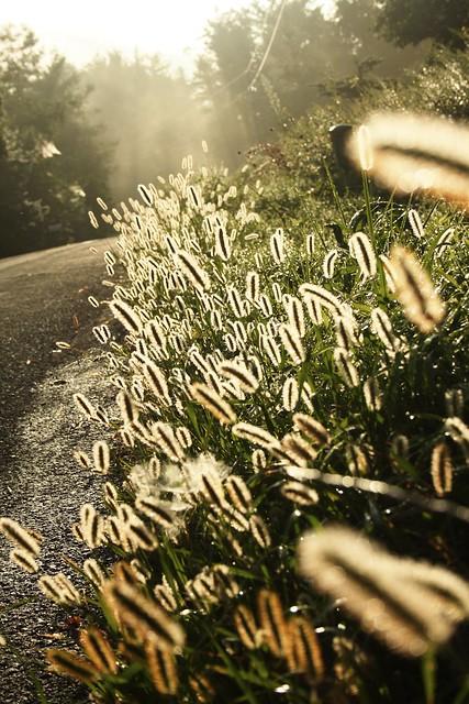 Roadside in the morning