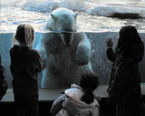 Polar Bear 20110401_42