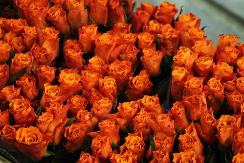Red Orange Roses