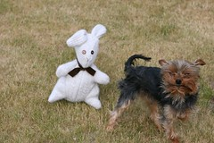 Mr.Bunny & Toby