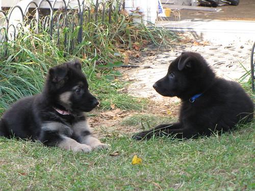 282/365 Pups