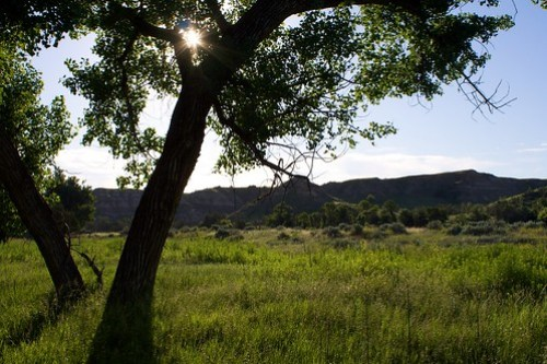 Morning sun in Cottonwood Campground, Roosevelt National Park