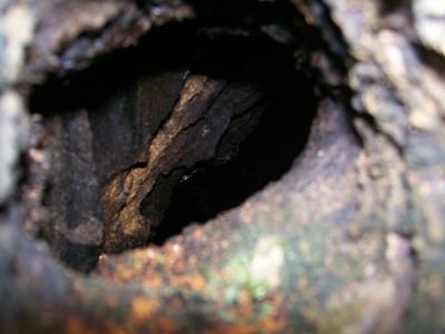 20100808_tree_hole1