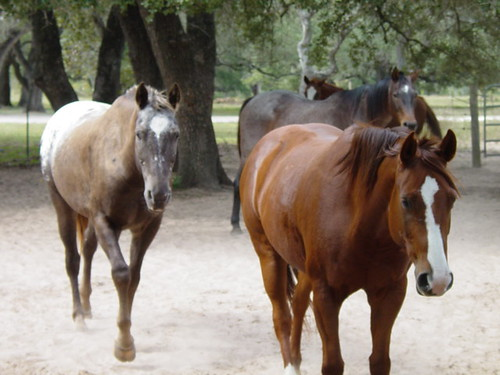 Stampede of horses