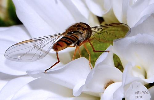 Wings n Petal