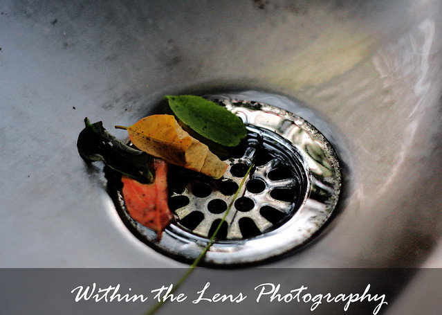 water fountain, autumn, fall, leaves, leaves in fountain, within the lens, photography