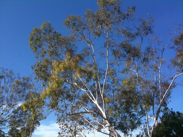 Trees, sky...