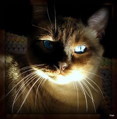 Whisker Wednesday~~ Miss Truffles Turn :)
