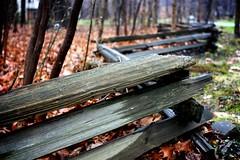 365/329: Split-rail fence