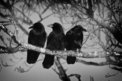Image result for 3 crows